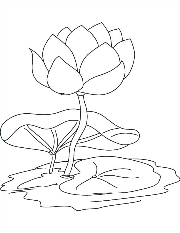 612x792 Lily Coloring Pages