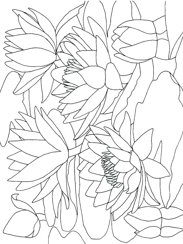 750x1000 Calla Lily Coloring Pages Water Lily Coloring Page Calla Pages