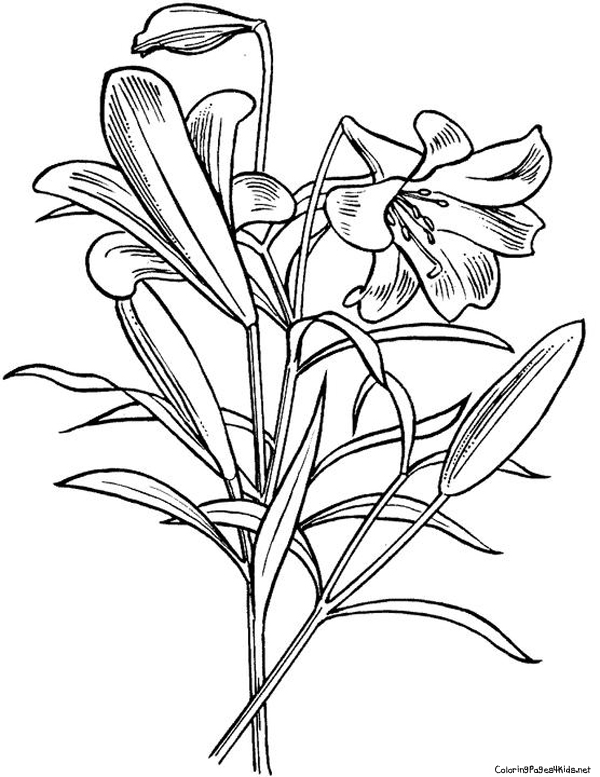 600x777 Easter Flowers Coloring Pages