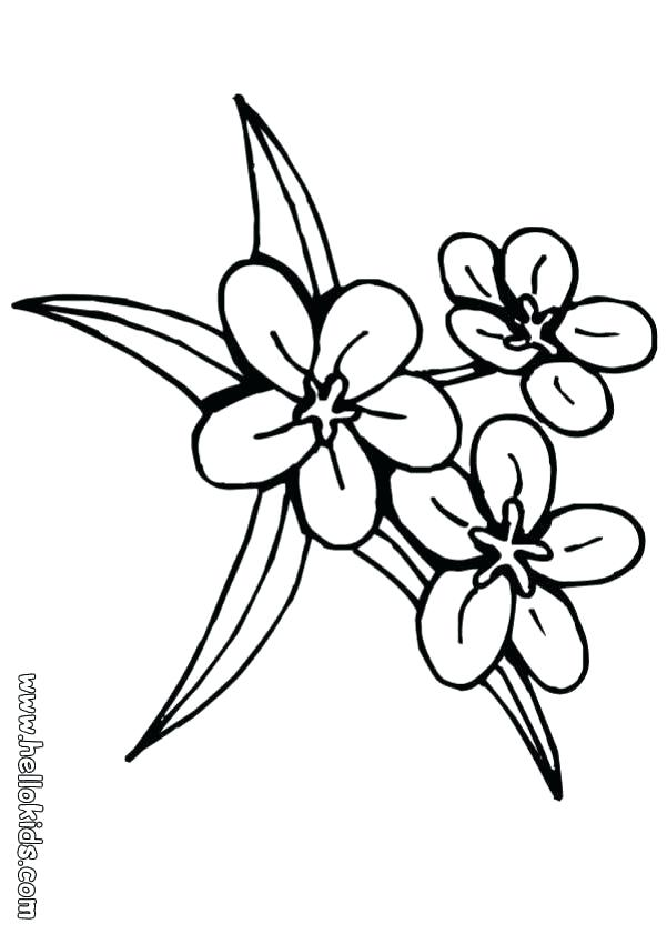 601x850 Coloring Pages Of A Flower Lily Flower Three Flowers Coloring Page