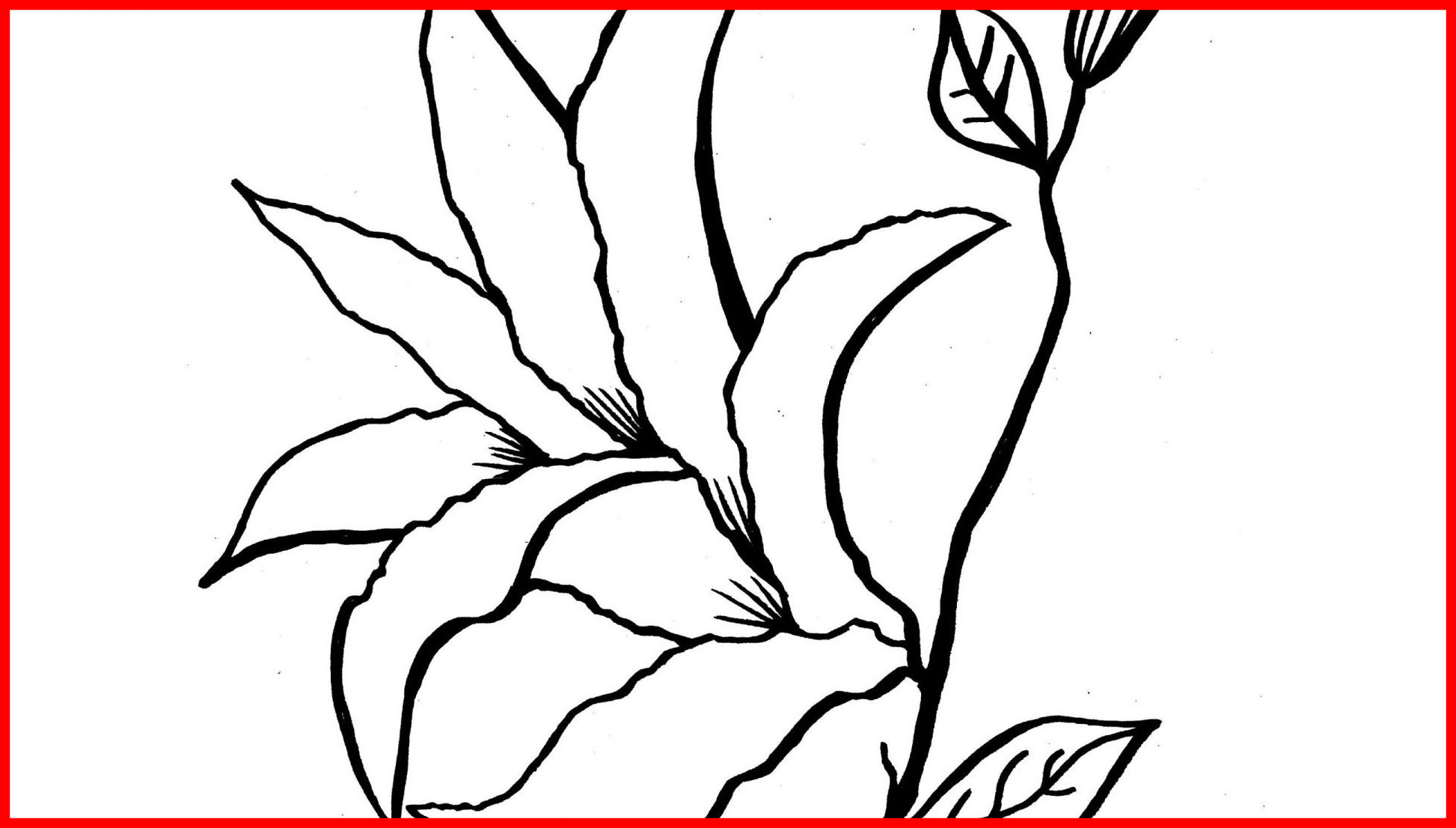 1946x1106 Easter Lilies Coloring Page Fancy Lily Pad Flower Coloring Pages