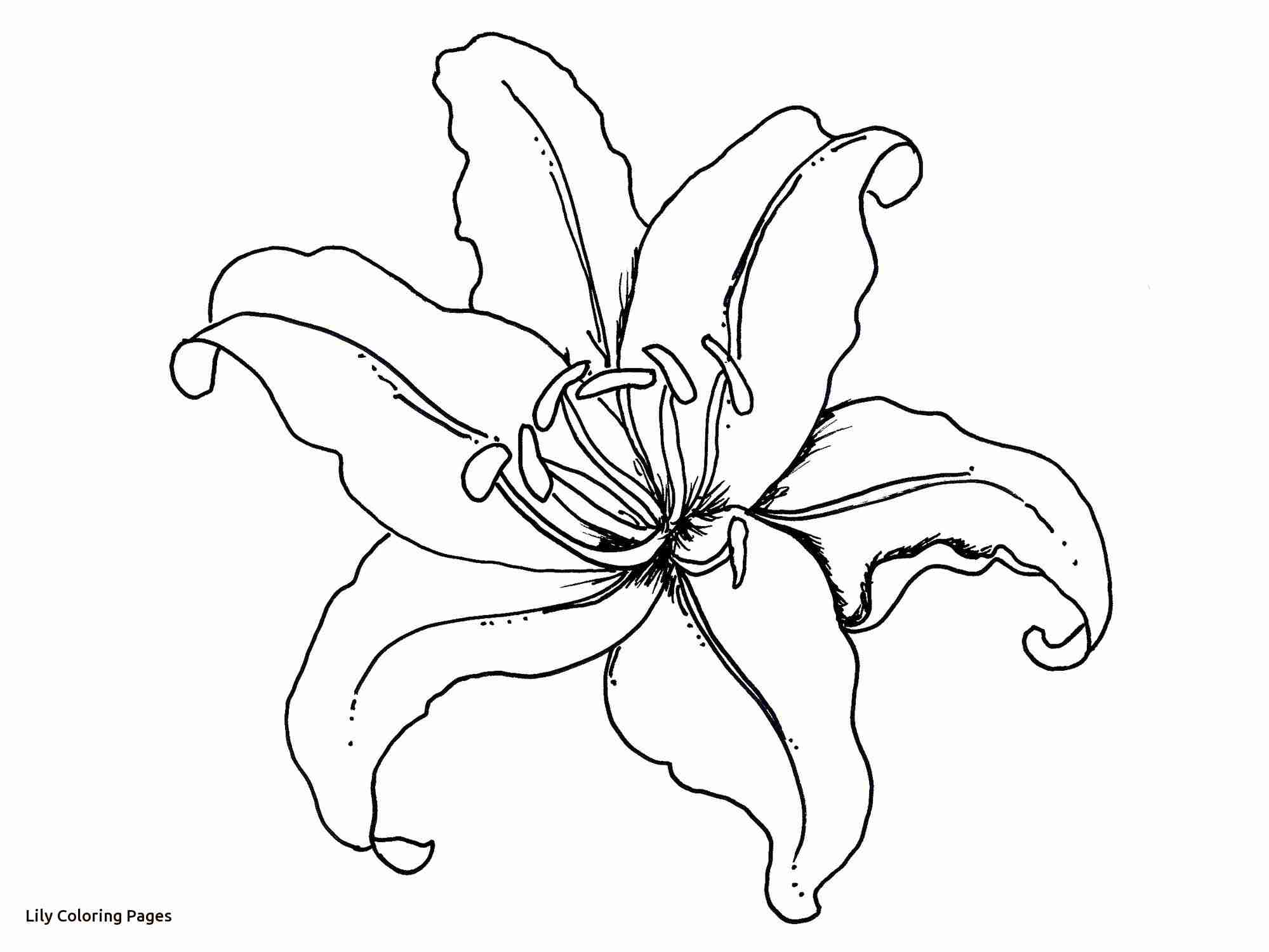 1999x1500 Flower Coloring Pages Lily For Free In Olegratiy