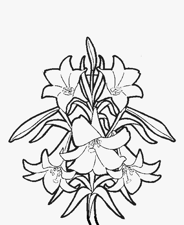 600x732 Lily Coloring Pages Lovely Lily Flower Coloring Pages Download