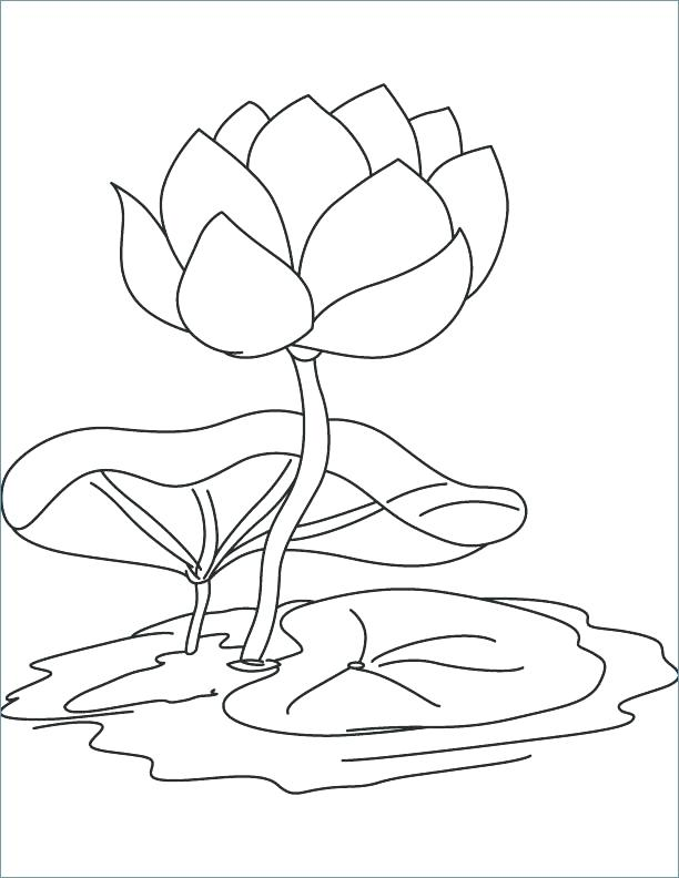 612x792 Lily Flower Coloring Pages Water Lily Coloring Page Water Lily