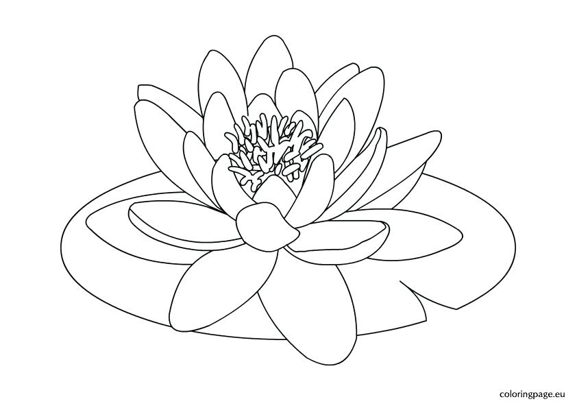 842x595 Lily Pad Coloring Page For Kids Water Lily Flower Drawing