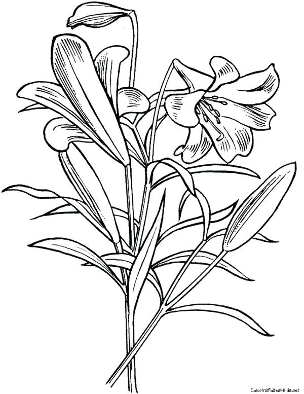 600x777 Lily Pad Coloring Pages Best Photos Of Lily Pad Flower Coloring