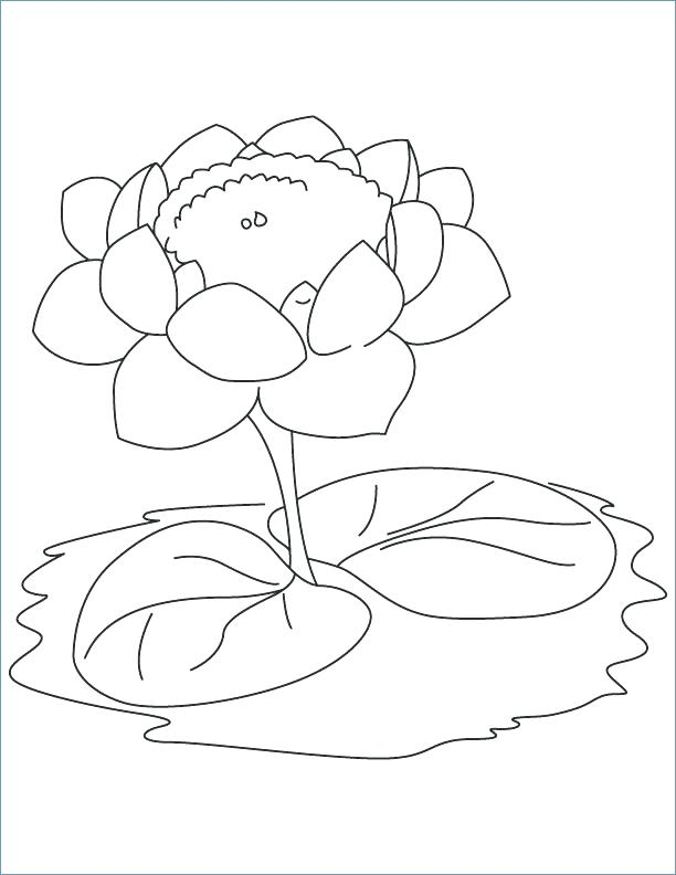 612x792 Lily Pad Flower Coloring Pages Lotus With Two Leaves Coloring Page
