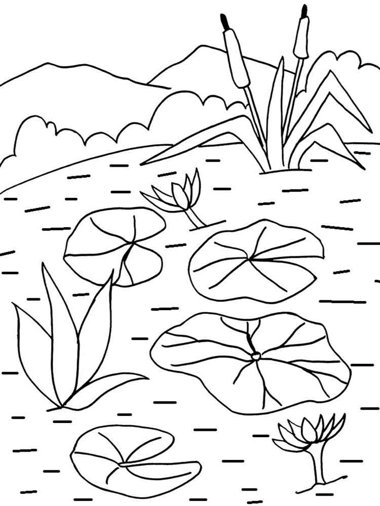 750x1000 Water Lily Coloring Pages Download And Print Water Lily Coloring