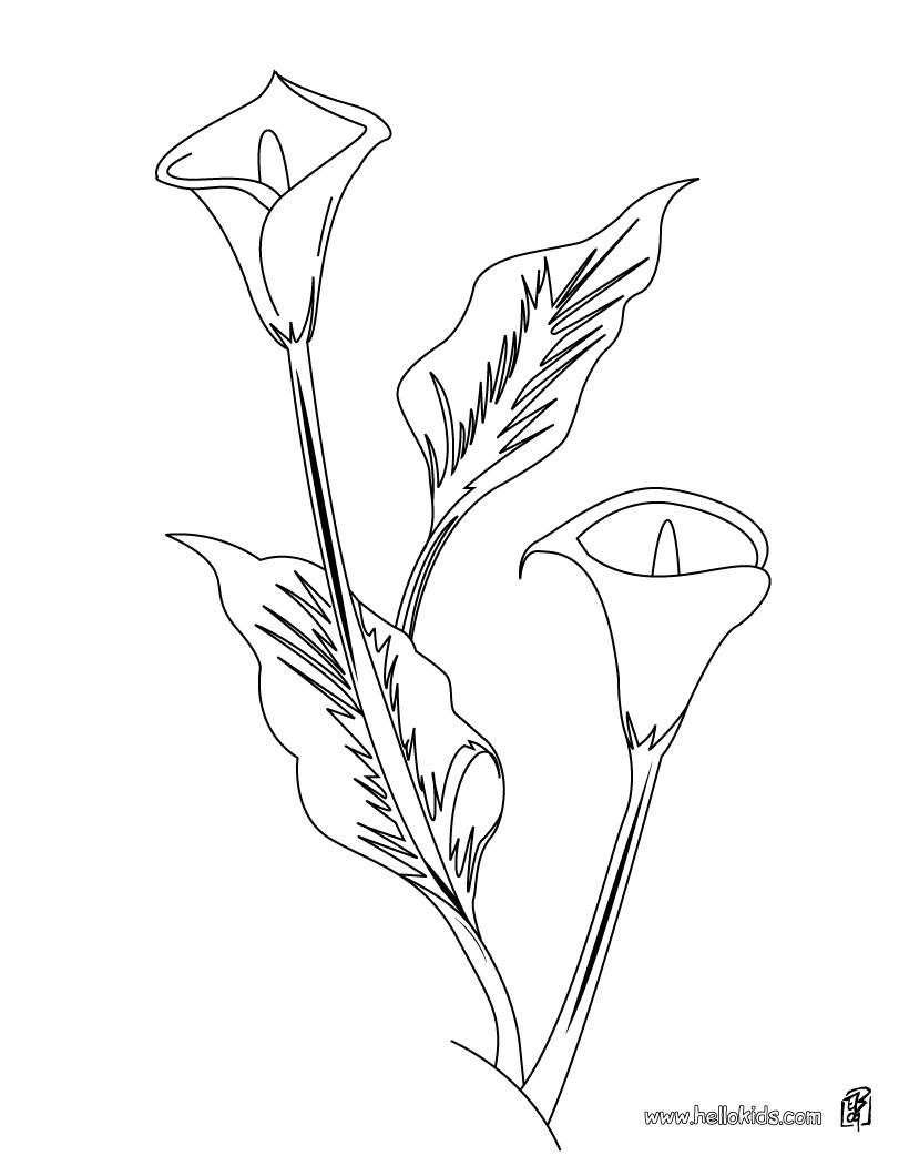 820x1060 Arum Lily Coloring Pages