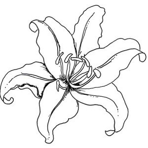 Lily Flowers Coloring Pages at GetDrawings.com   Free for personal ...