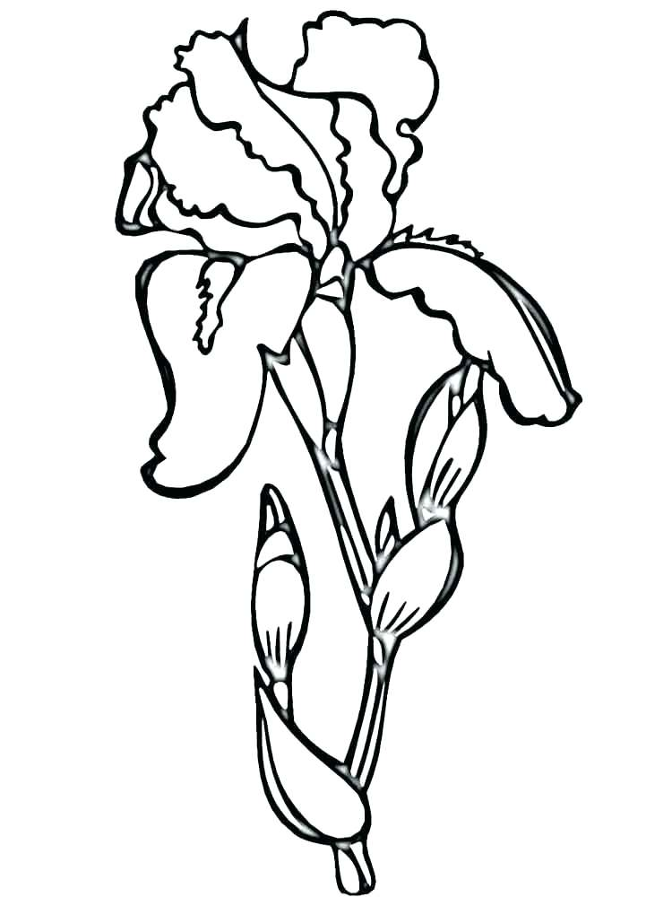 750x1000 Lily Of The Valley Coloring Page S S Lily Of The Valley Coloring