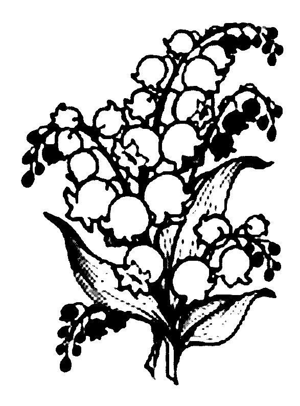 587x794 Lily Of The Valley Coloring Page