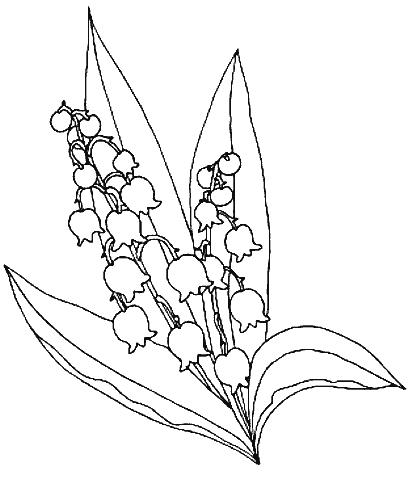 412x480 Lily Of The Valley Coloring Page