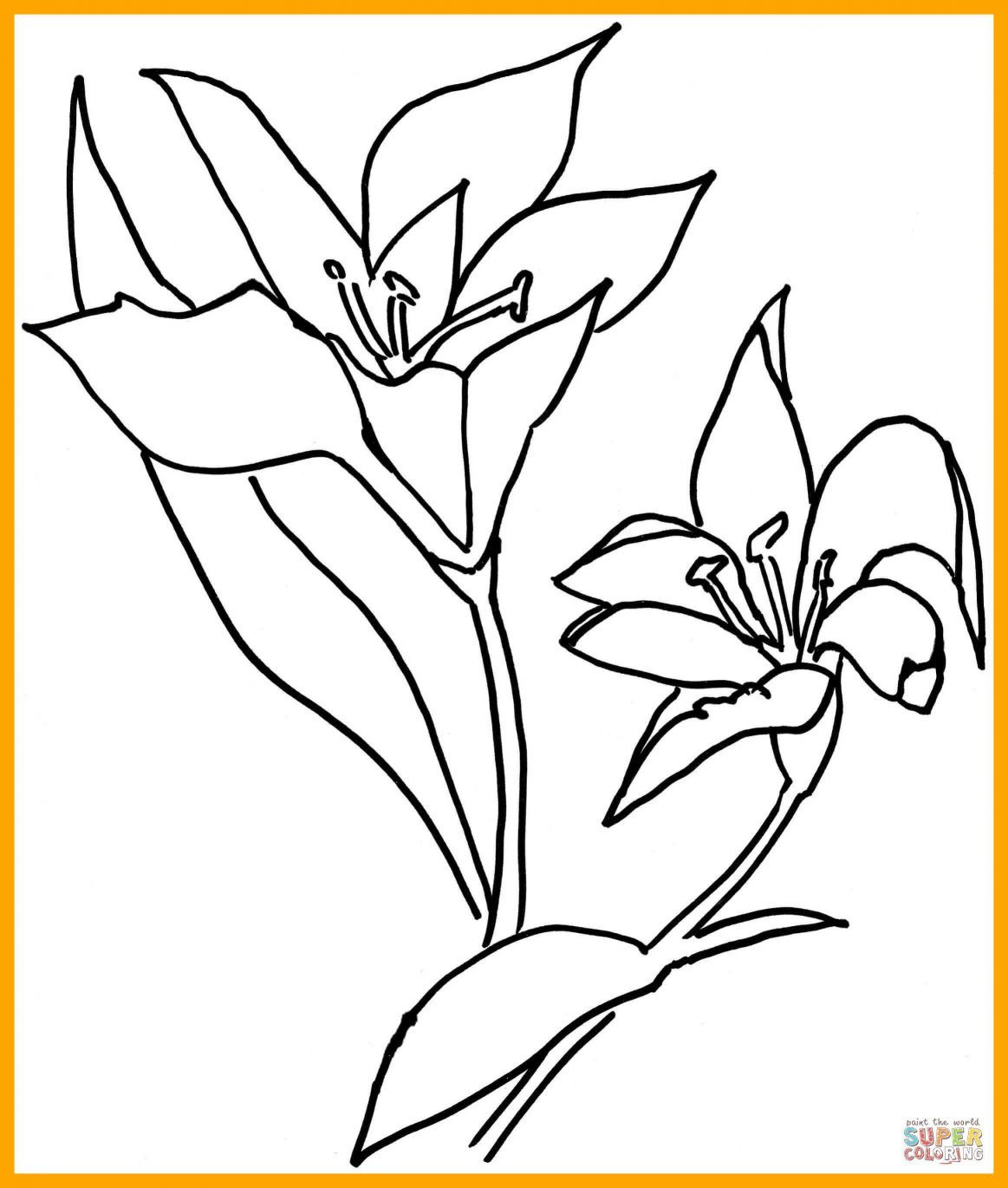 1163x1370 Shocking Lilium Or Lily Flower Coloring Page Printable