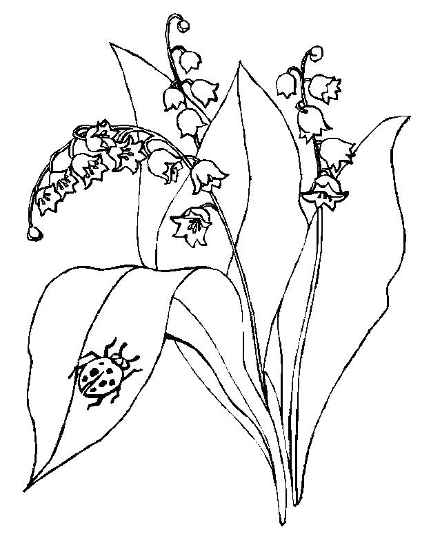 625x794 Lily Of The Valley Coloring Page Fuhrer Von