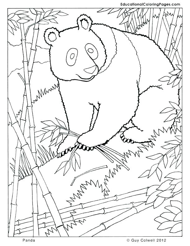 612x792 Panda Coloring Pages Top Rated Panda Coloring Pages Pictures Panda