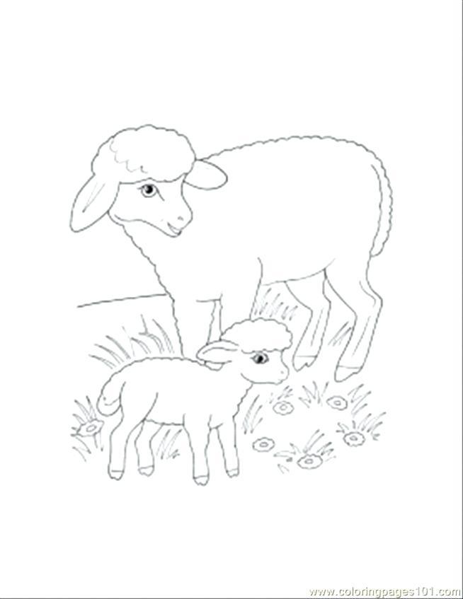 654x847 Lamb Coloring Page