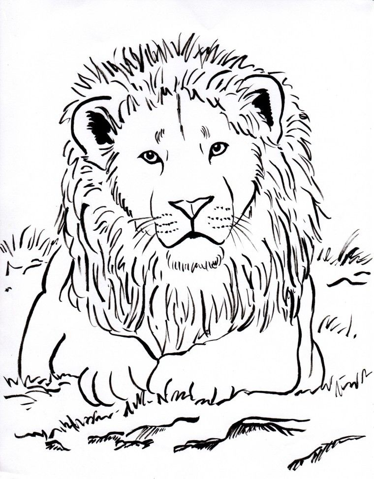 760x974 Week Upside Down Lots Of Animal Coloring Pages Lion Coloring