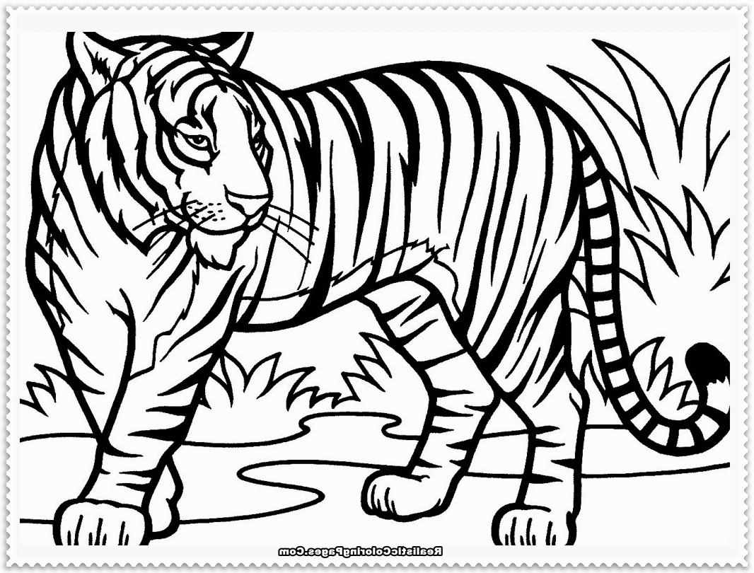 1066x810 Lion And Tiger Coloring Page Tiger And Lion Coloring Pages