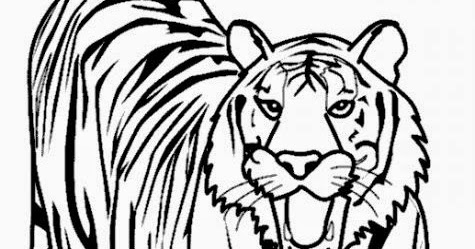 475x249 Lions And Tigers Coloring Pages Free Coloring Pages