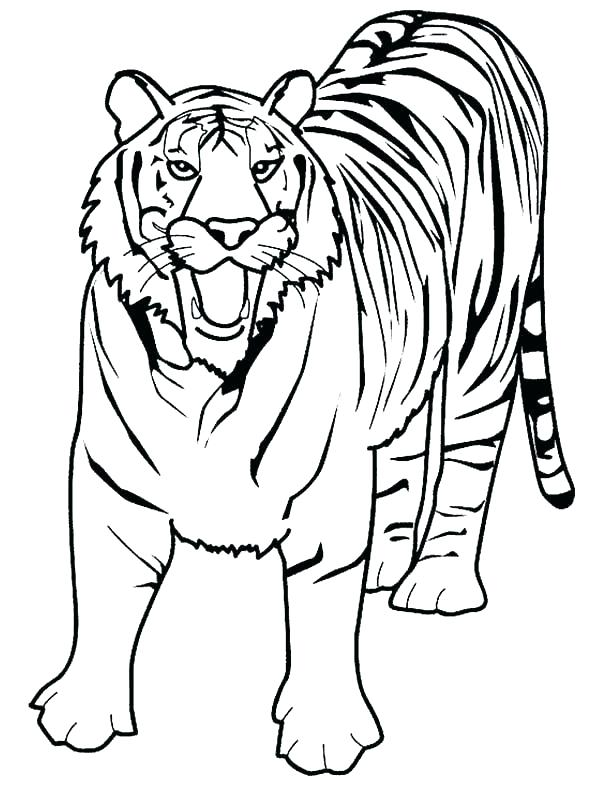 600x786 Printable Tiger Color Pages Printable Coloring Free Printable