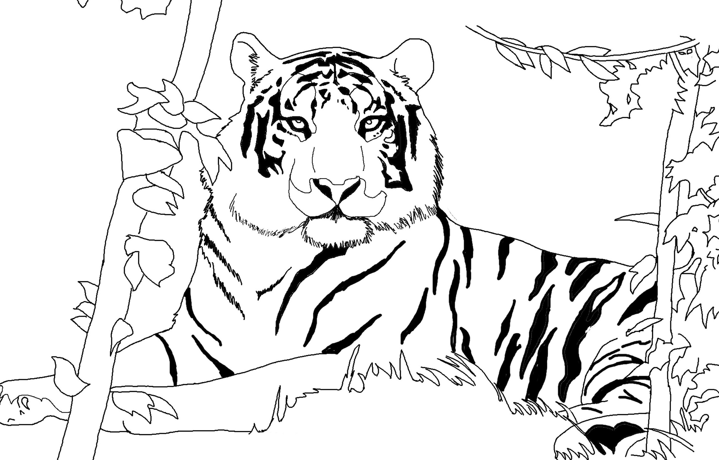 2913x1865 Beautiful Tiger Coloring Pages Advance