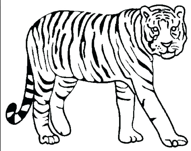 736x581 Tiger Coloring Pages Printable Focus Printable Pictures Of Tigers