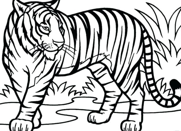 600x434 Tiger Coloring Pages Tiger Coloring Pages Intricate Art For Adults