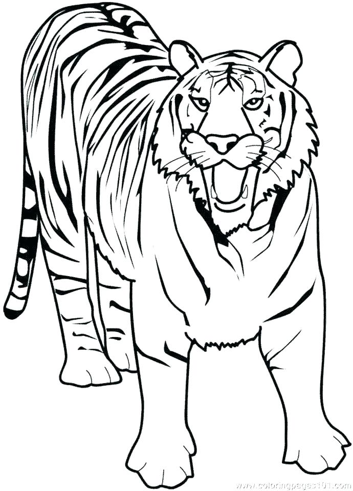690x960 Printable Tiger Coloring Pages