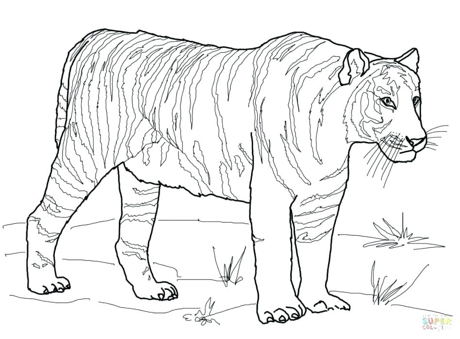 948x700 Coloring Pages Tiger Auburn Coloring Pages Tiger Coloring Pages