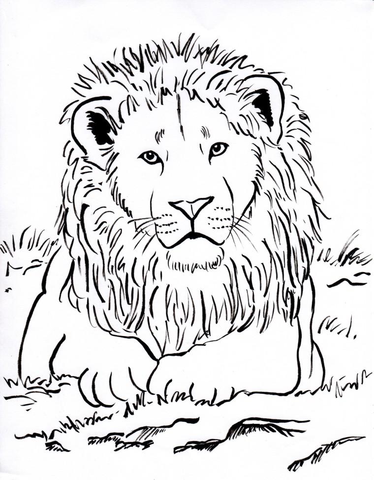 760x974 Lion Coloring Page