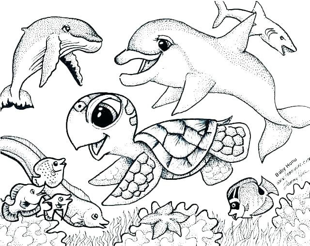 640x509 Sea Lion Coloring Page Seal Coloring Sheets Free Printable Seal