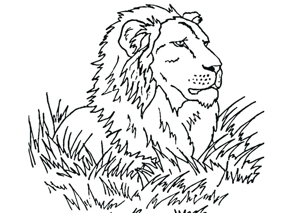 957x716 Coloring Pages Lions Coloring Page Lion Free Lion King Coloring