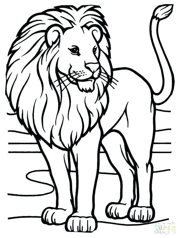 618x824 Lion Coloring Page