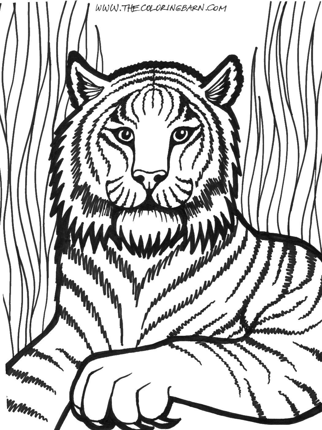 1050x1400 Lion Cl