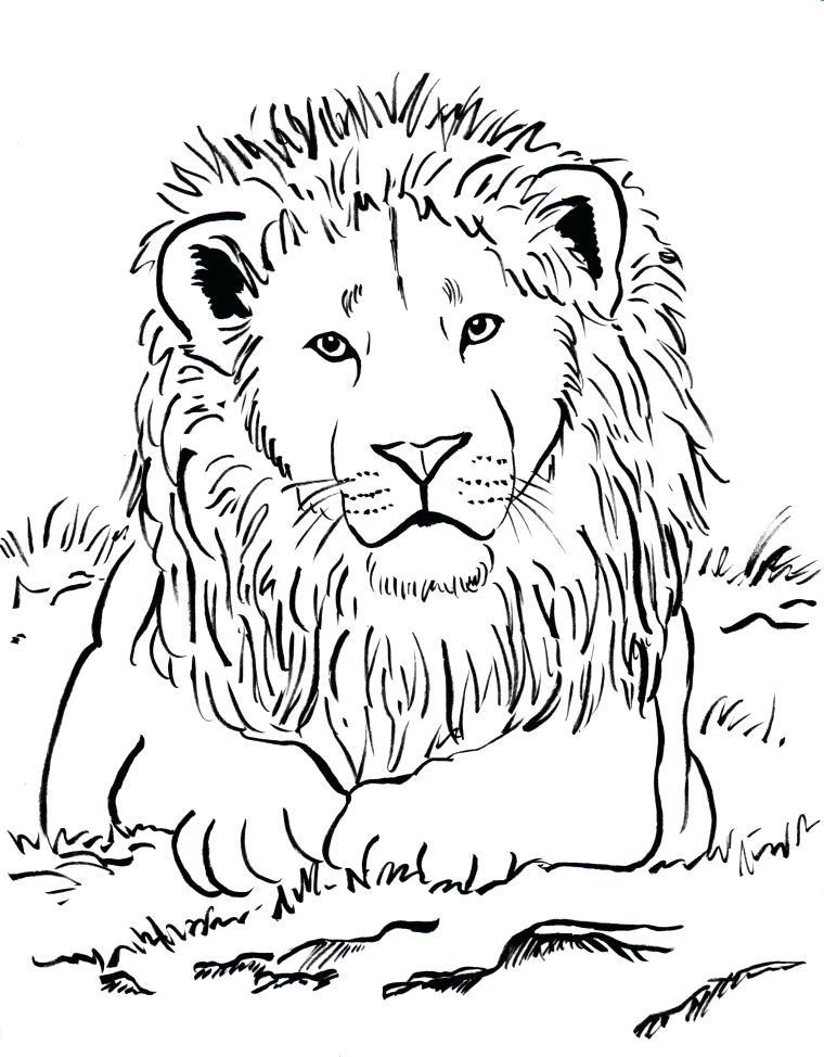 760x974 Lion Color Page