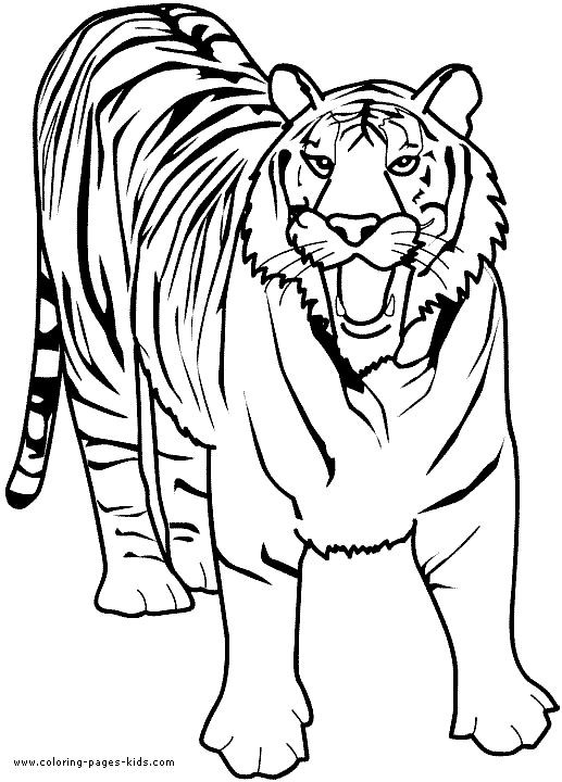 517x720 Lion Coloring Pages Printable