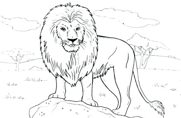600x393 The Rock Coloring Pages Lion Coloring Pages To Print Lion Standing