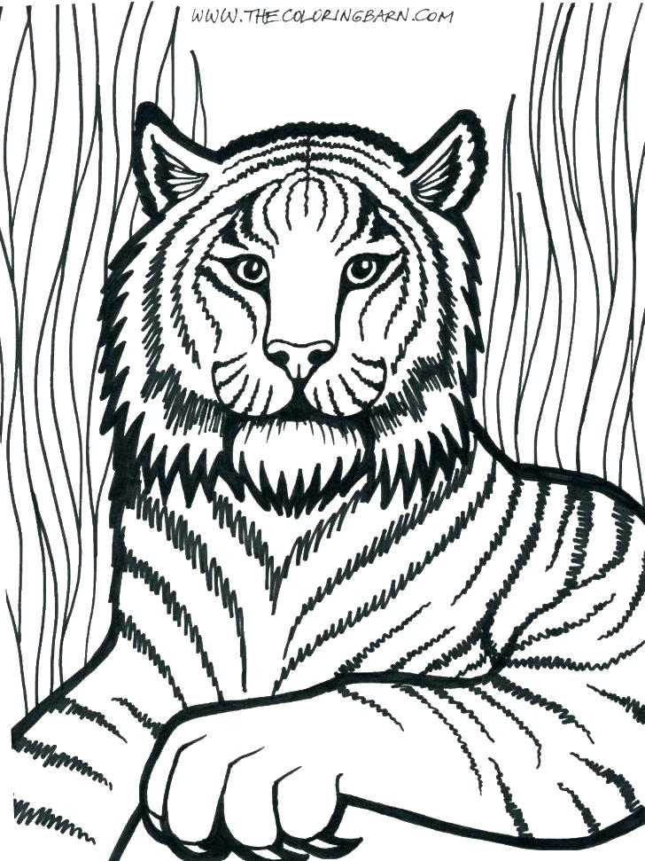 728x971 Free Printable Lion Coloring Pages For Kids Lions And School Page