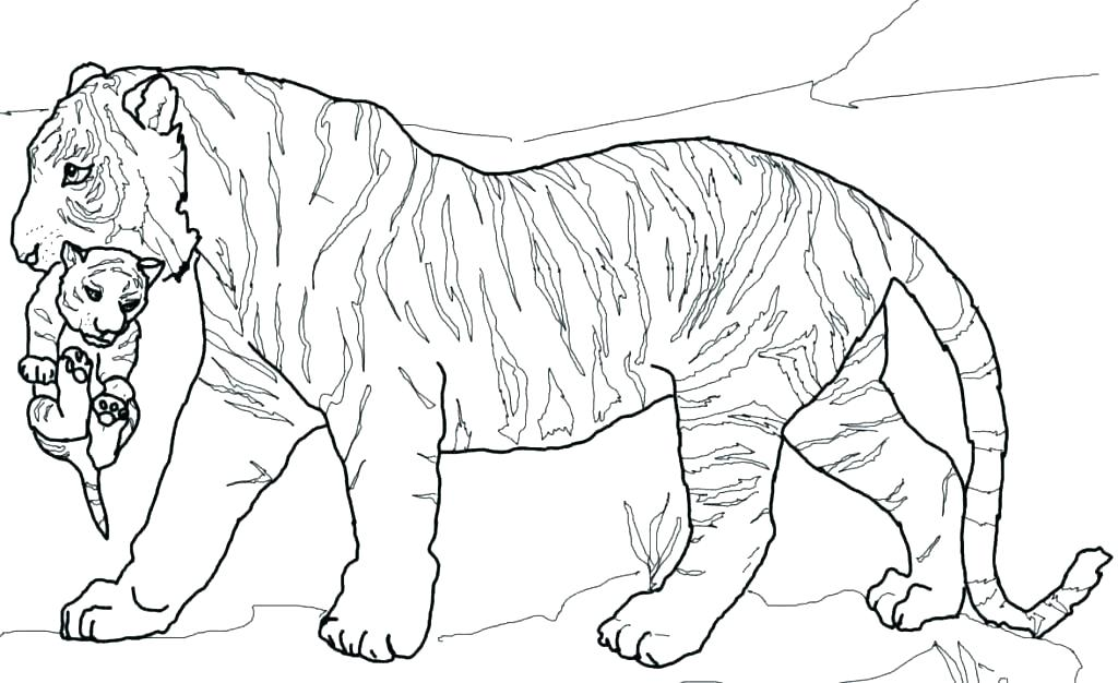 1024x626 Printable Tiger Coloring Pages Tiger Coloring Pages Free Printable