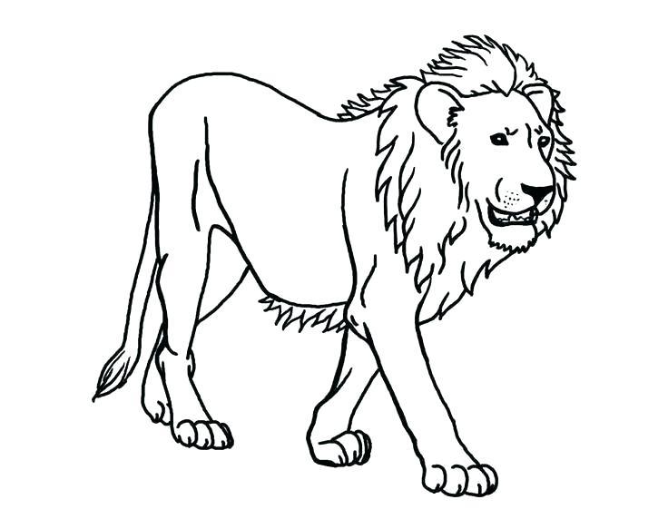 736x572 Lion Cub Coloring Pages