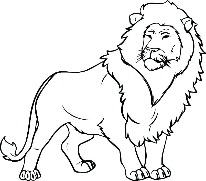 805x710 Coloring Page Lion Lion Coloring Page Mountain Lion Coloring Pages