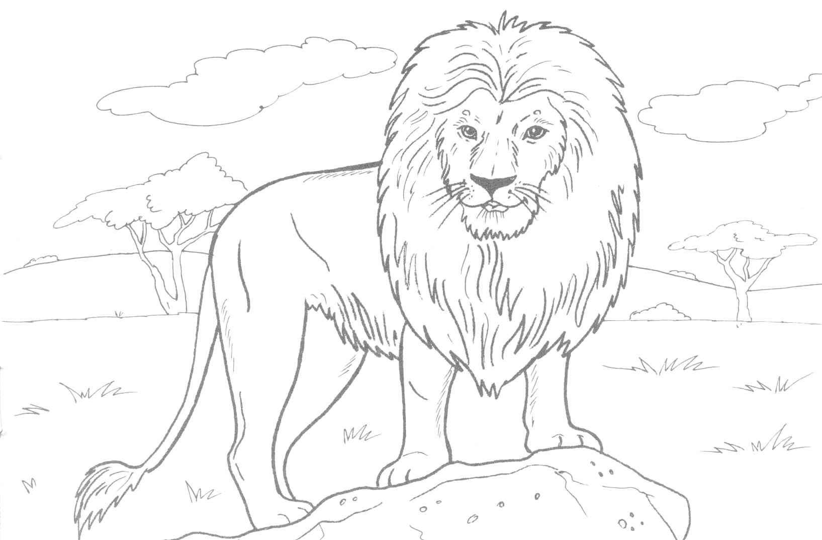 1635x1074 Powerful Lion Coloring Pages Printable For Kid