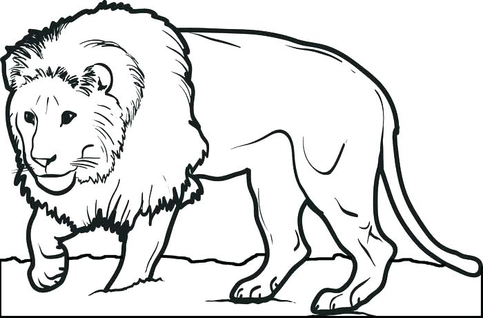 700x460 Baby Lion Coloring Pages Lion Family Coloring Pages Baby Lion Cub