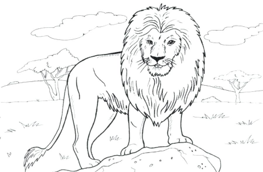900x590 Coloring Pages Disney Cars Free Printable Realistic Lion Page