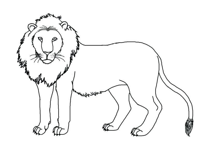 792x612 Lion Face Coloring Page Fair Lion Head Coloring Pages Lion