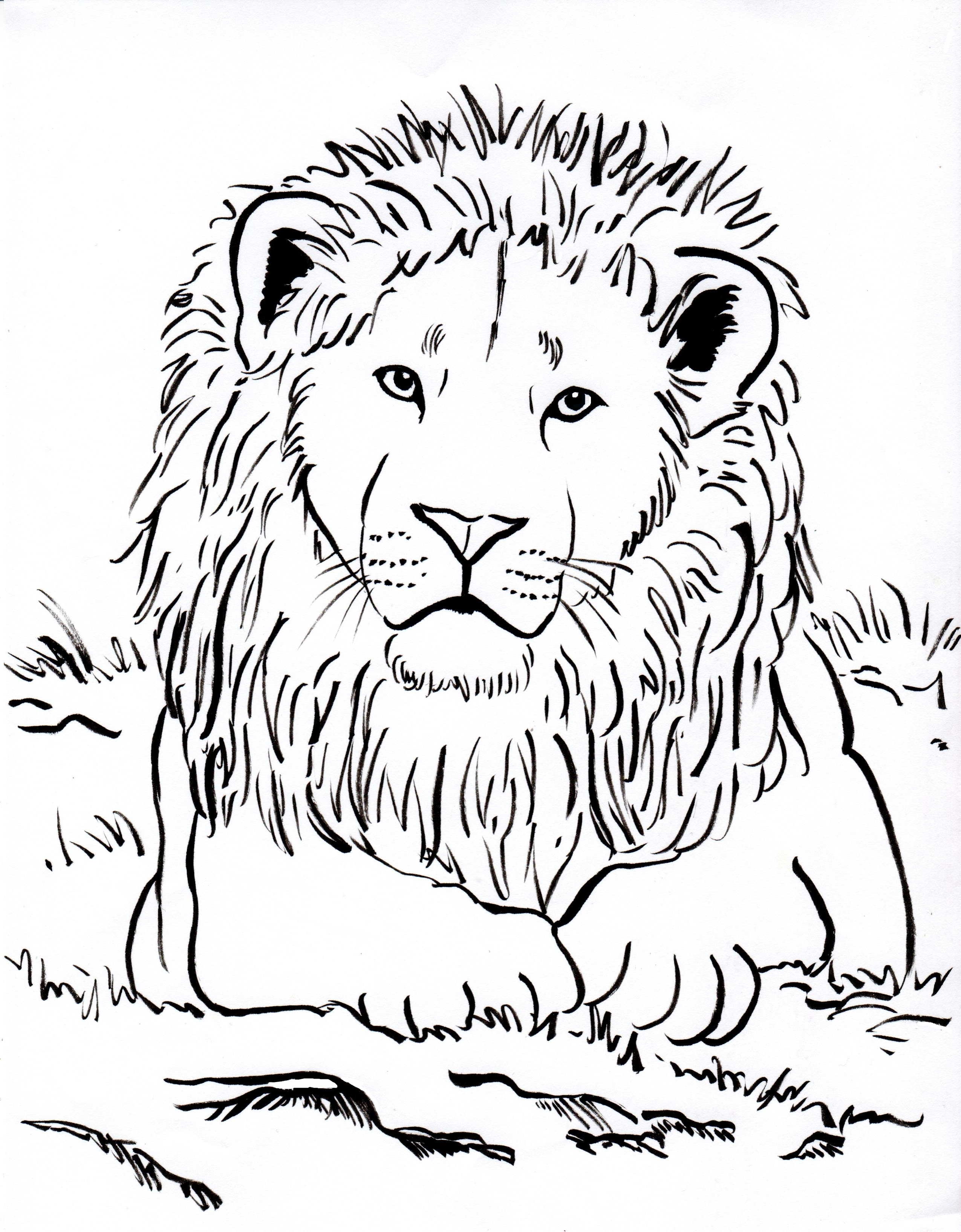 2550x3269 Lion Head Coloring Page Printable Lion Head Coloring Pages