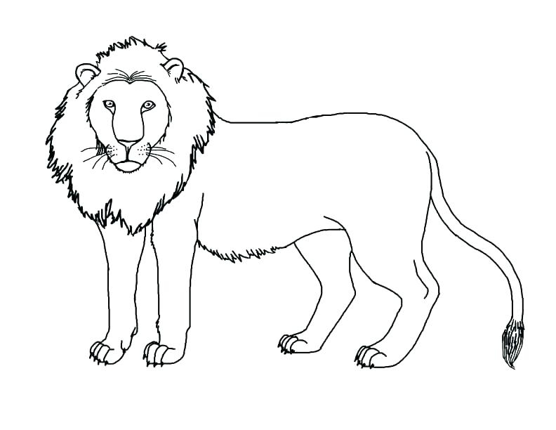 792x612 Simba And Nala Coloring Pages Simba And Nala Coloring Pages Lion
