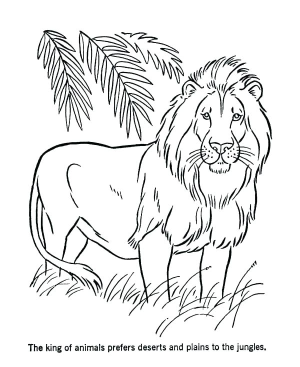 600x734 Coloring Pages Of Lions Lion King Printable Coloring Pages