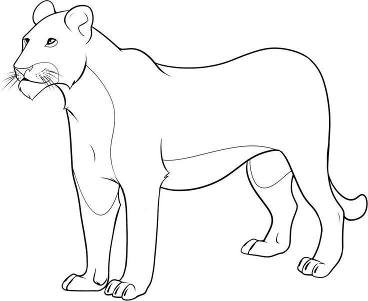 736x602 Lion Coloring Pages Free Printable Lion Coloring Pages